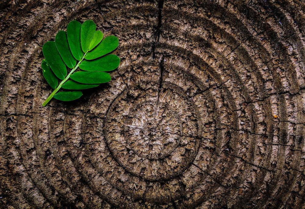 environmental stewardship -