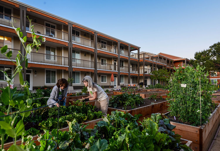 Low-rise units overlook shared gardens at   Mountain View Cohousing   in California