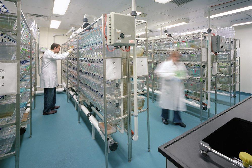 Zebrafish Lab