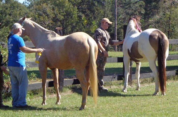 Grooming Horses