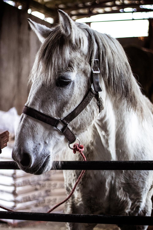 horsefren.jpg