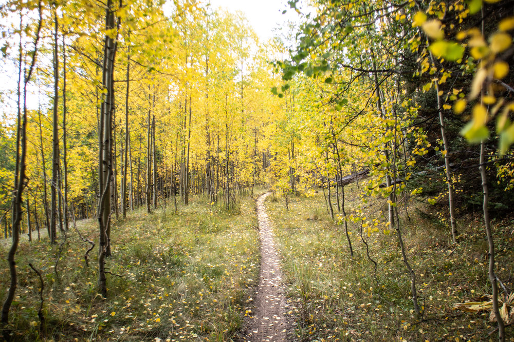 Mancos - The aspen forests above Mancos are absolutely spectacular, especially in the Spring and the Fall. This is about 1.5 hrs drive from Durango.