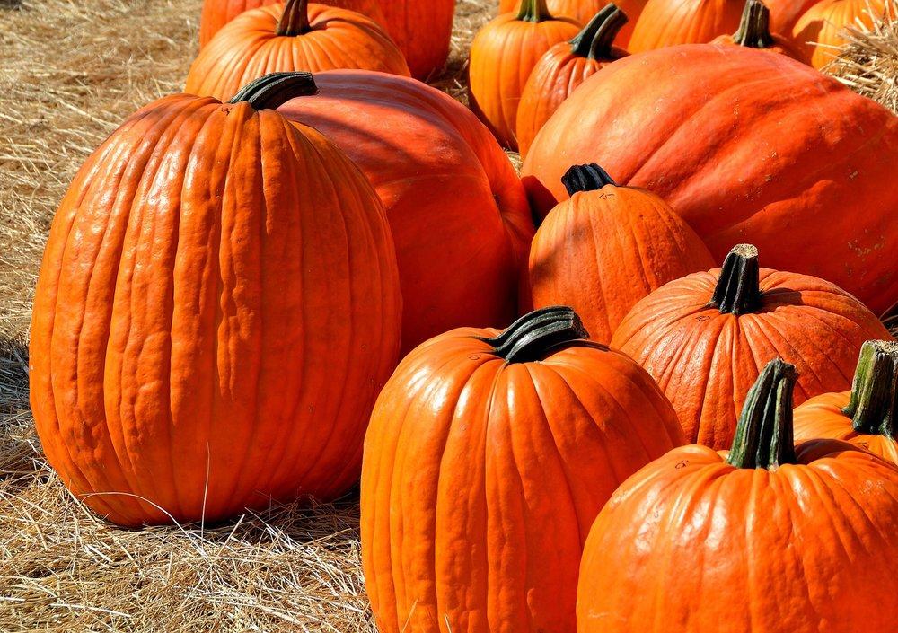 TAAL 0917 fall1.jpg