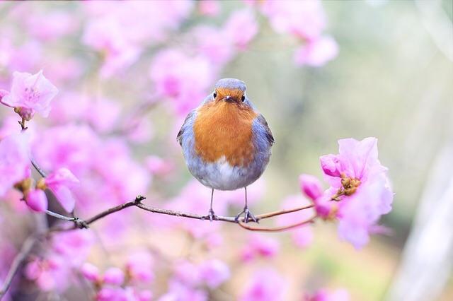 009 spring.jpg