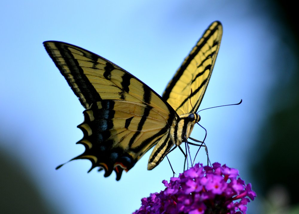 butterfly and flower.jpeg