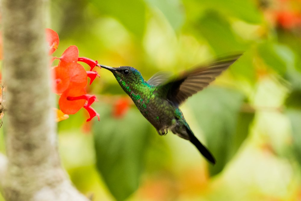 hummingbird with flower.jpeg