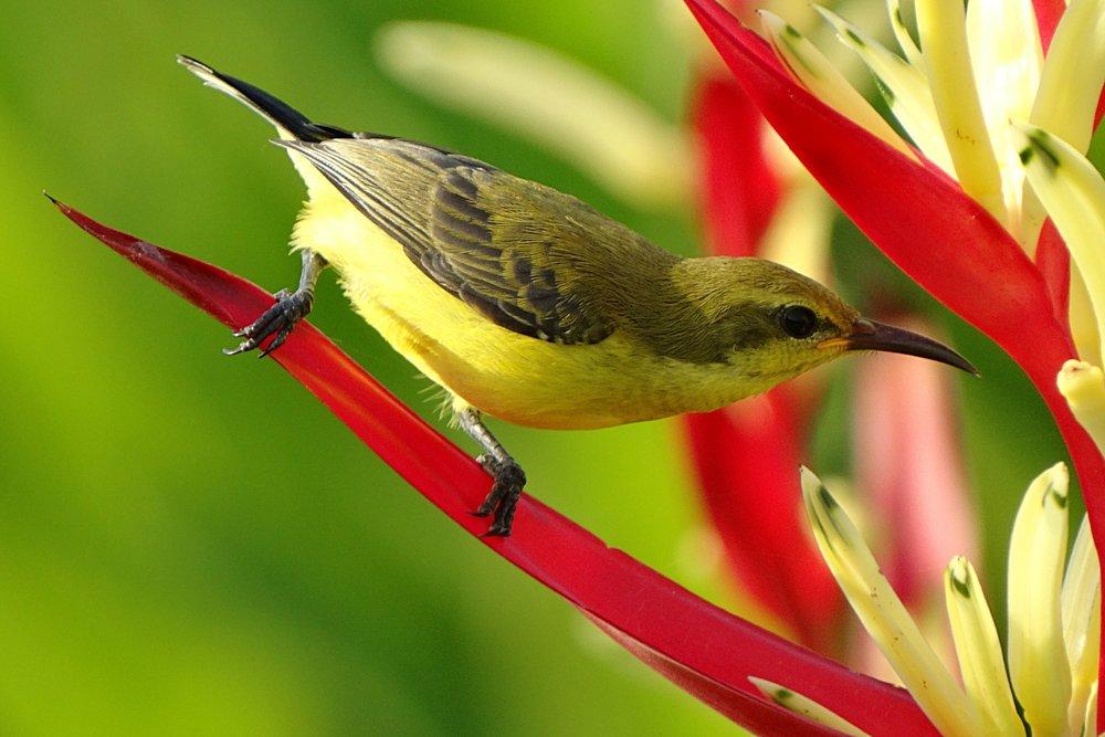 bird with flower.jpeg