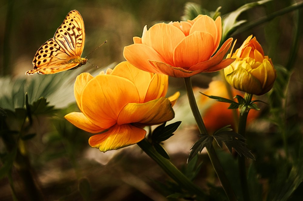 110 flowers-background-butterflies-beautiful-87452.jpeg
