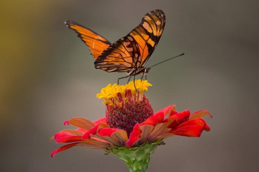 butterfly  flower2.jpeg