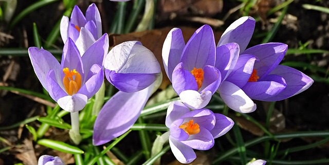 011 spring.jpg