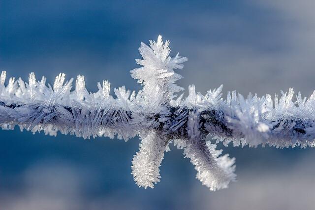 5TAAL 1117 frost1.jpg