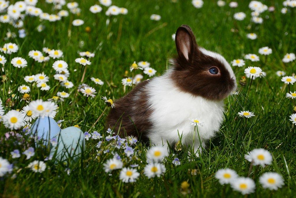 113 animal-bright-bunny-372166.jpg