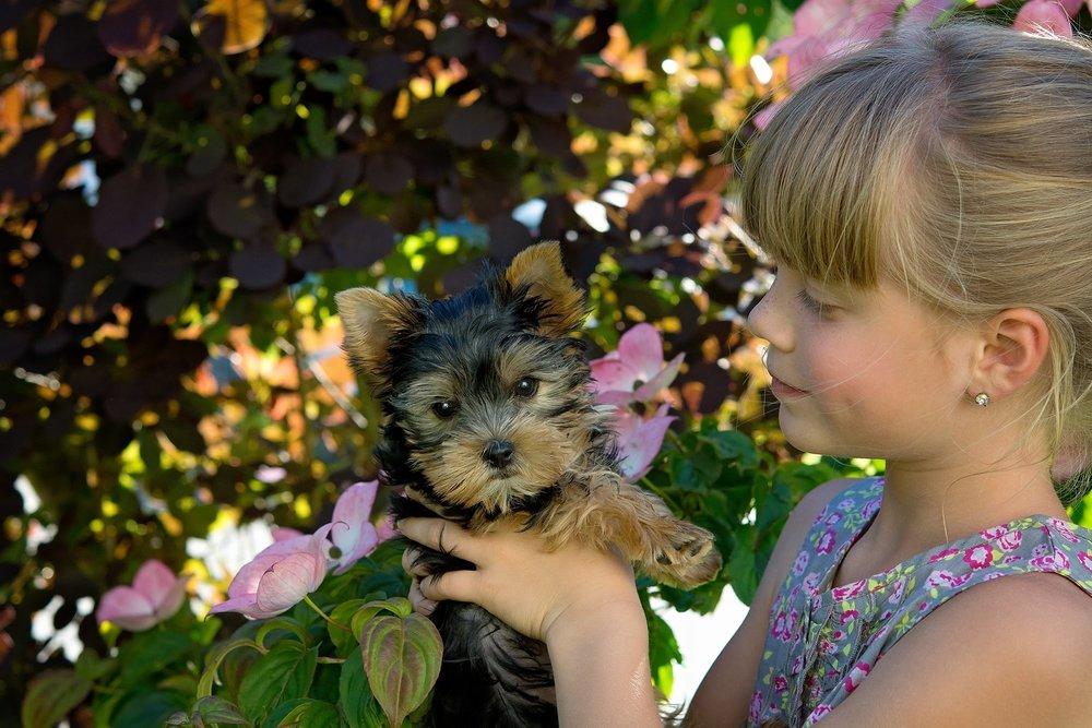 dog flowers.jpeg