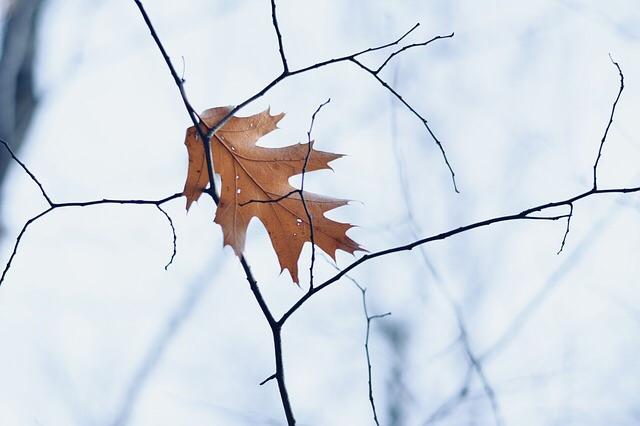 autumn solace.jpg