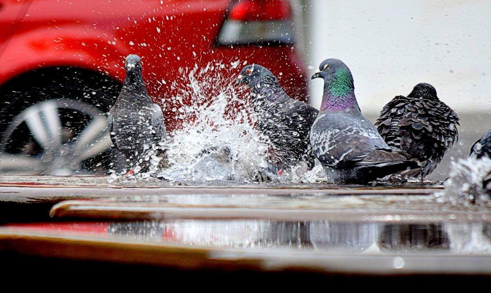 106b birds-color-fun-166639.jpg