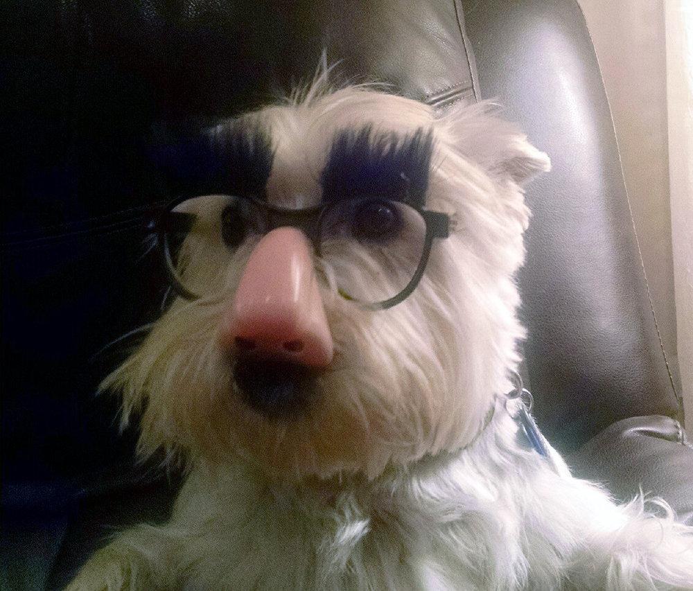 Delia-Hager-Boscana-Groucho-Barks.jpg
