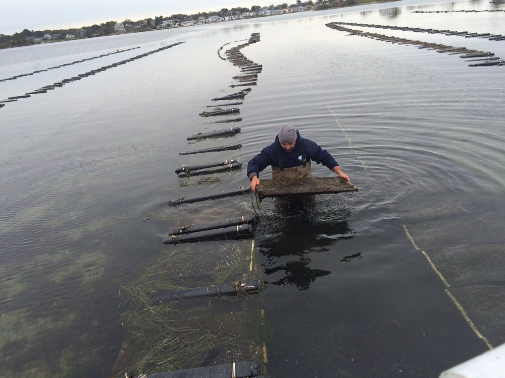 Matunuck Oyster Farm Perry1.JPG