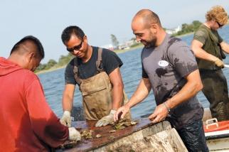 oyster-farm-3.jpg