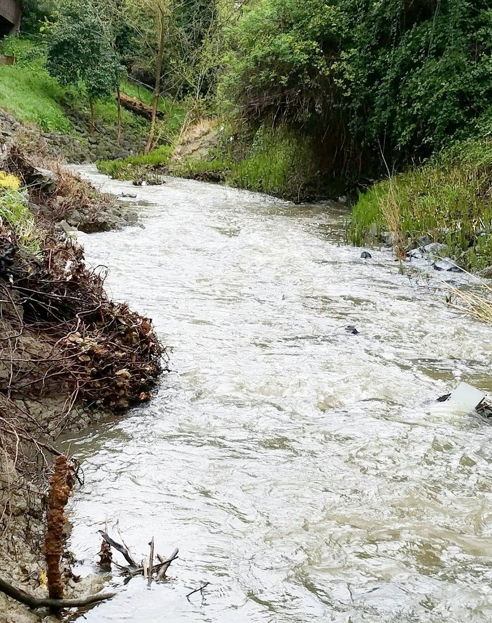 Las Trampas Creek runs along the western boundary of Leigh Creekside Park