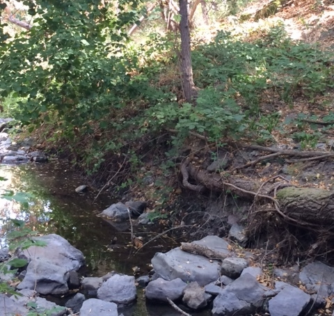 Las Trampas Creek defines the western border of Leigh Creekside Park. In September 2017, the water was low, after ~6 months with no rain.