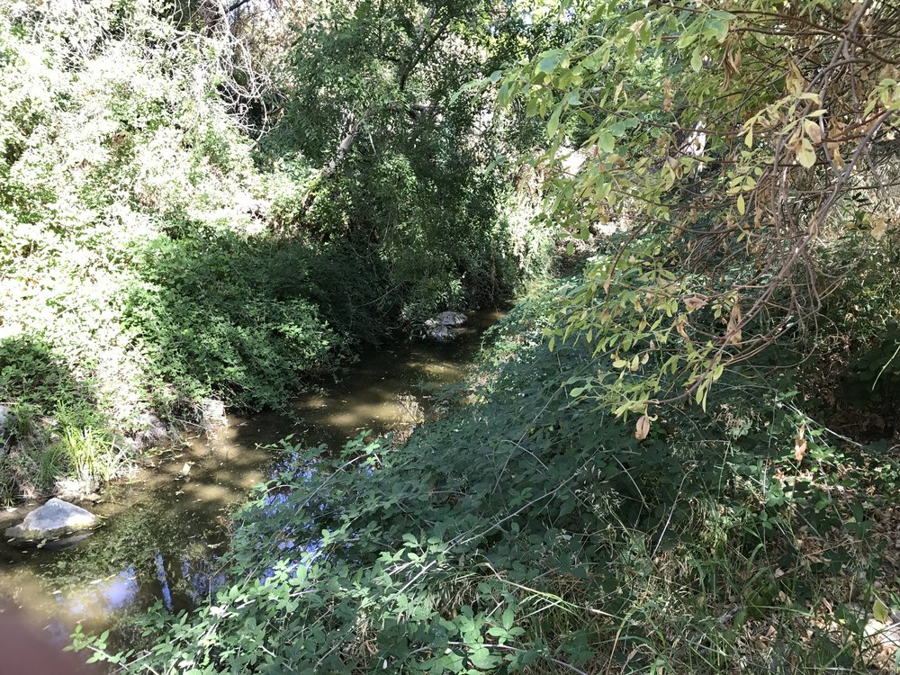 Las Trampas Creek in October after seven months without rain.