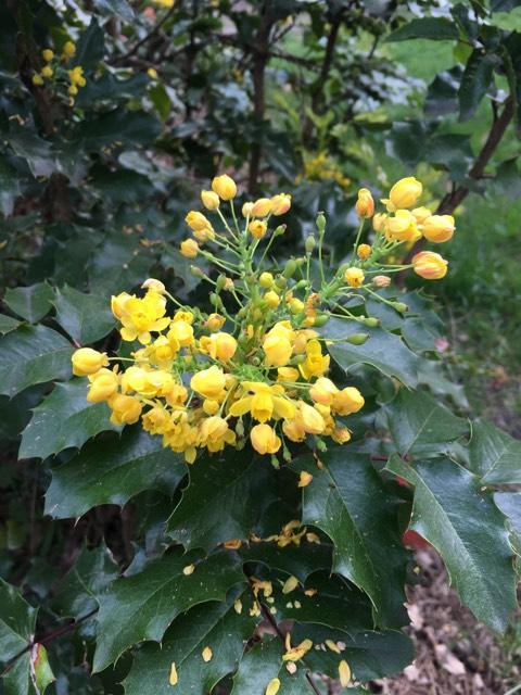Spring flowers bloom in Leigh Creekside Park.
