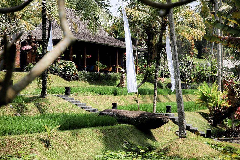 Bali-010.jpg