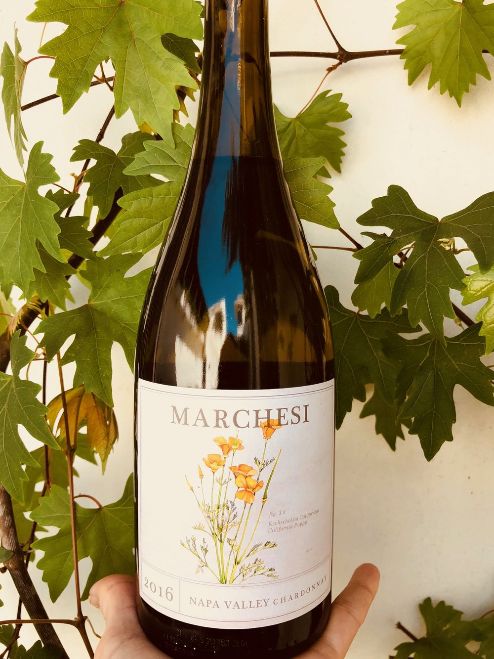 - David Marchesi Napa Valley Chardonnay 2016 (Carneros Hills) is a well-balanced traditional Chardonnay. Not overly fruity, and not very buttery-oaky but definitely note the French oak. We will buy again as a daily drinker.List $27 Angel Price $16