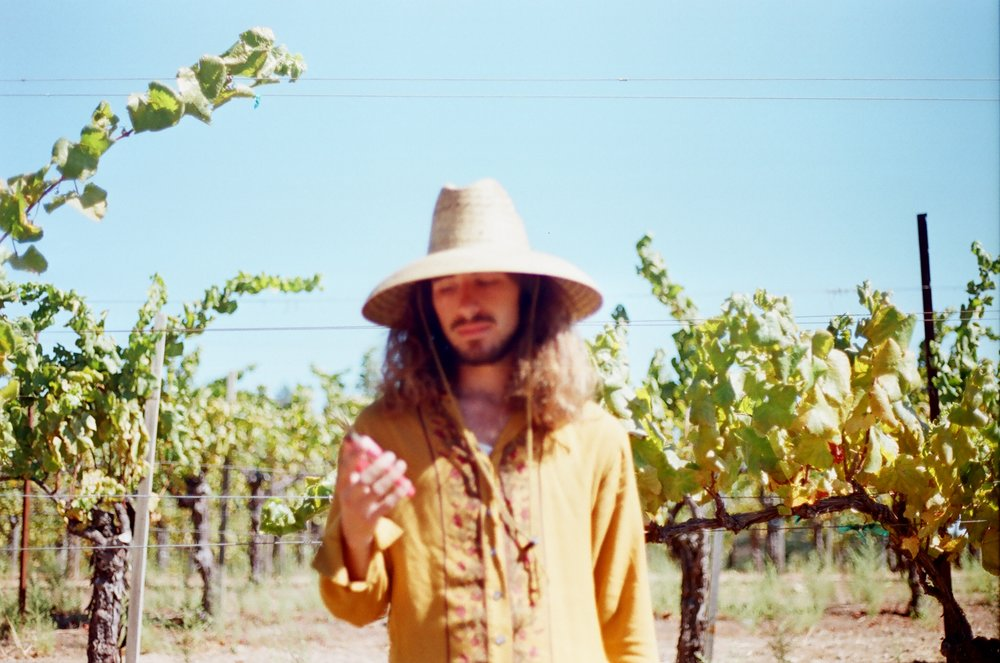 The Vines - In a time of great distress I was offered a job in the fields with a close friend.  I was saved.