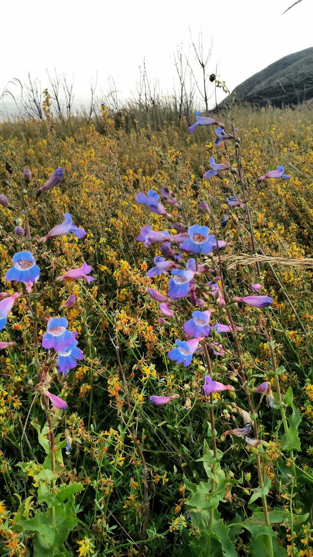 Photo by Micah Tasaka at Etiwanda Preserve, Rancho Cucamonga, CA.