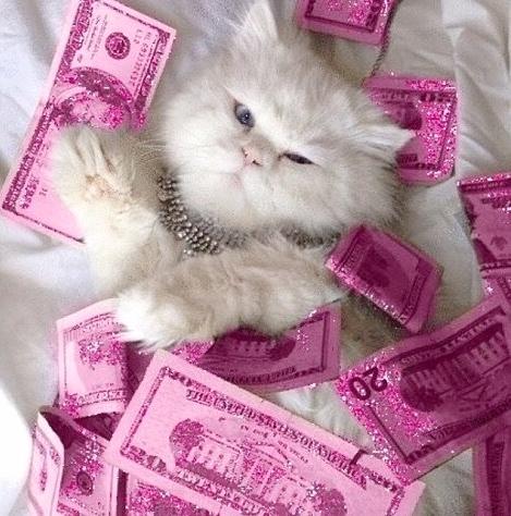 cat pink money.jpg