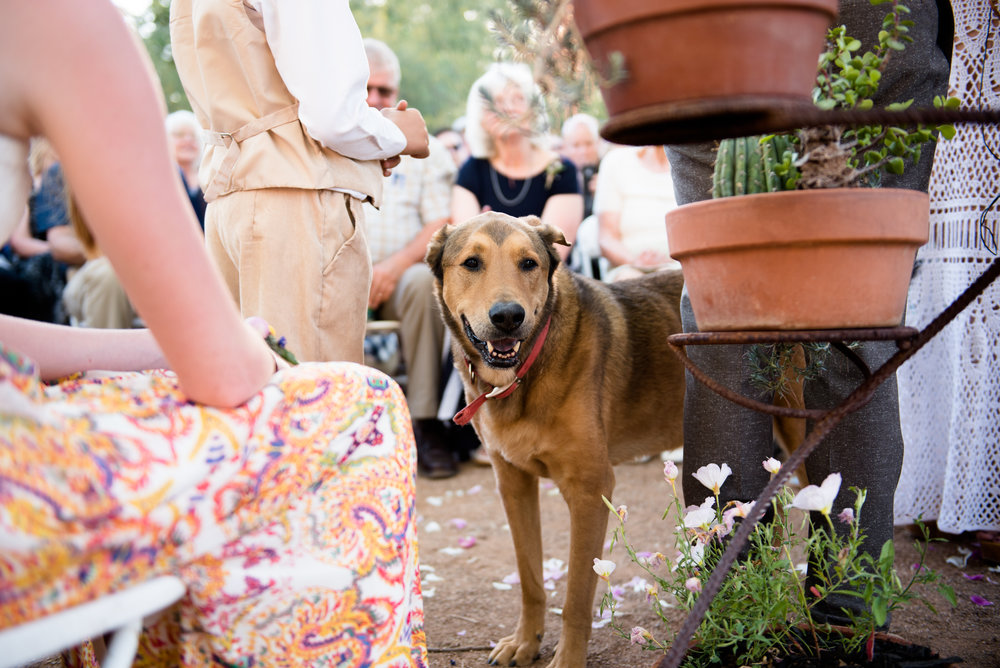 This wedding was truly a family affair. Even the furry children made an appearance!