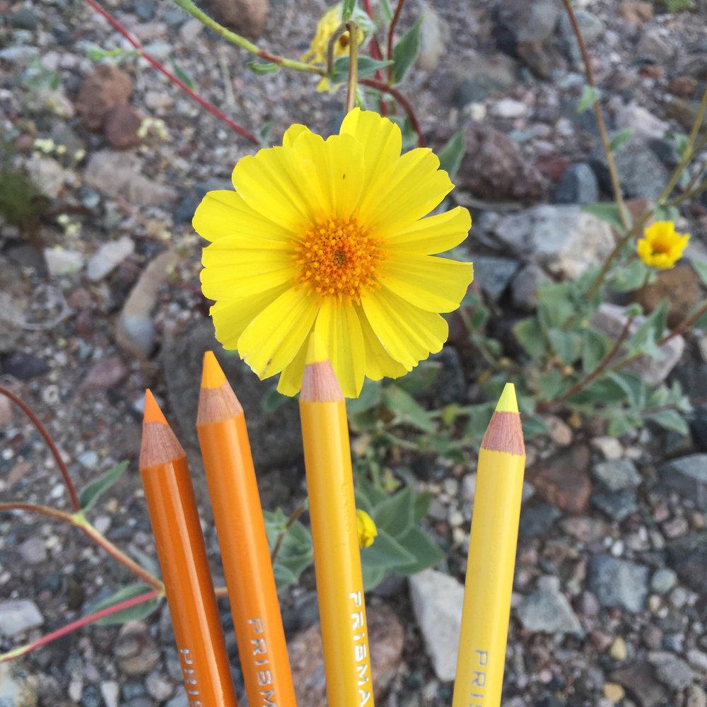 Superbloom Pencils.jpg