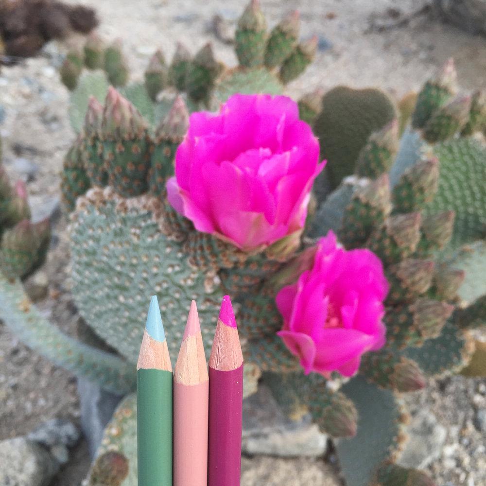 Prickly Pear Pencil.jpg