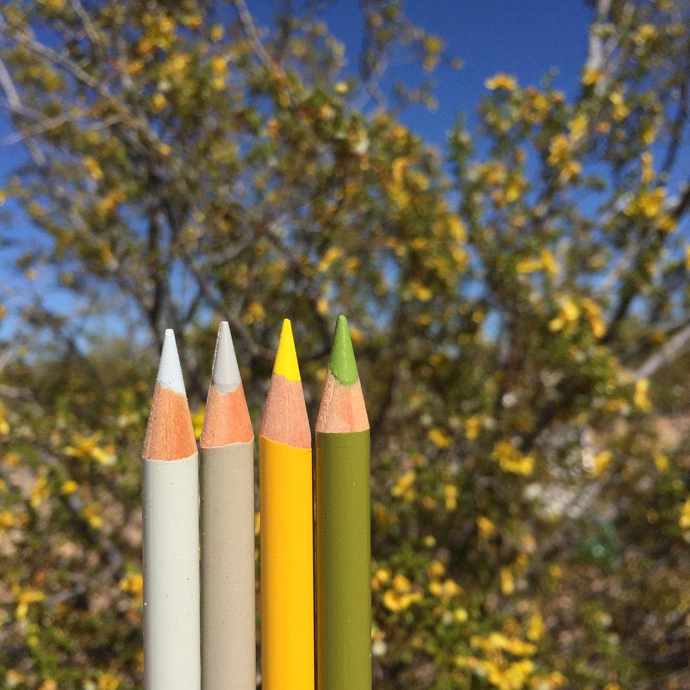 Creosote Pencils.jpg