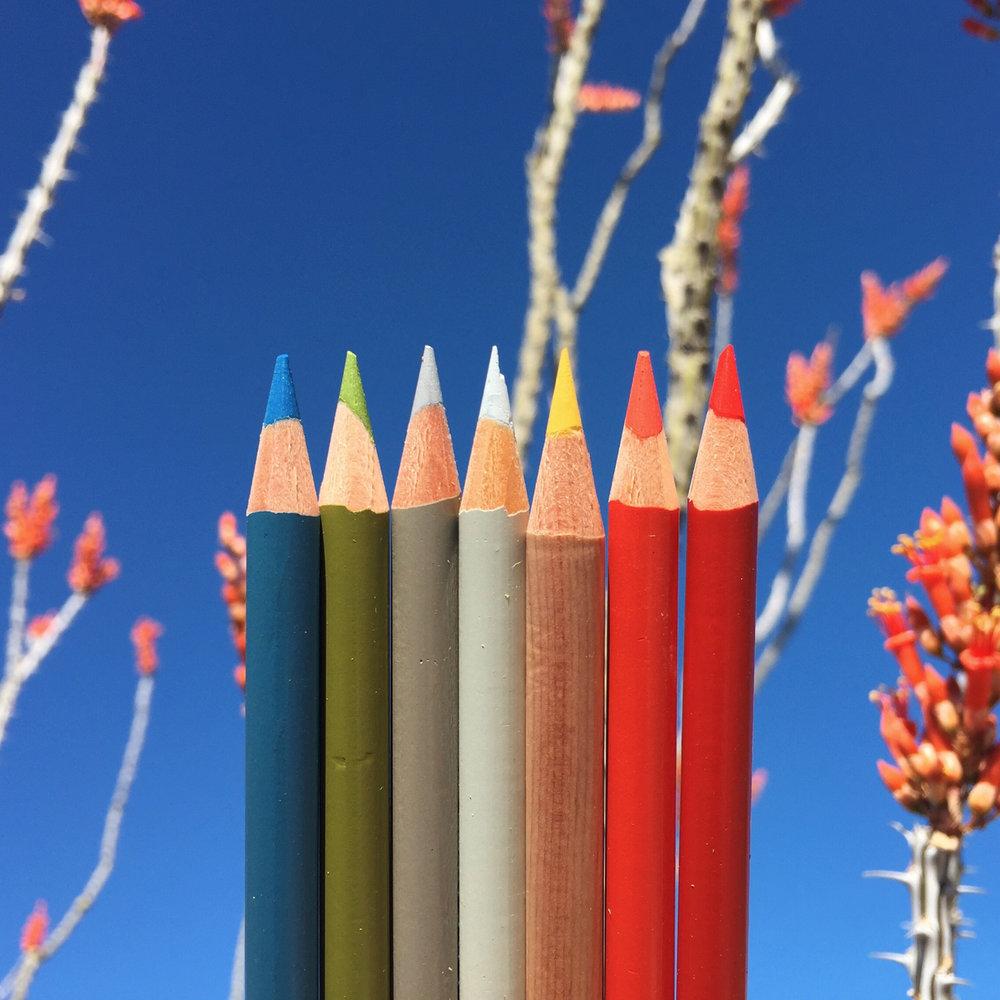 Ocotillo Pencil.jpg