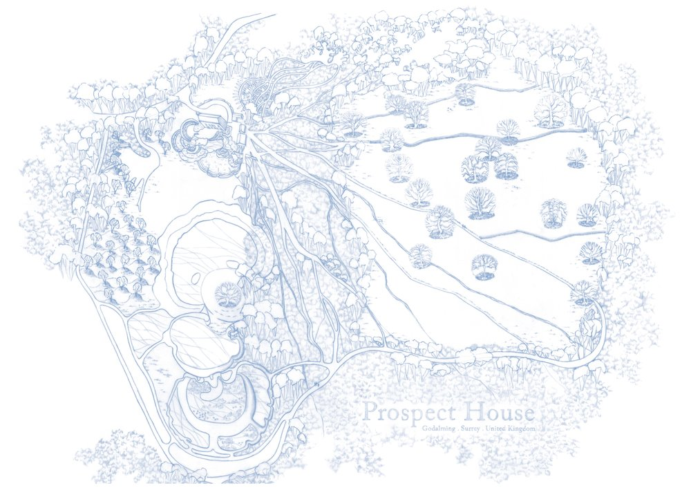 D5 Wedgewood Blue.jpg