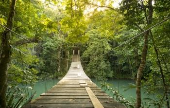 footbridge in forest.jpg