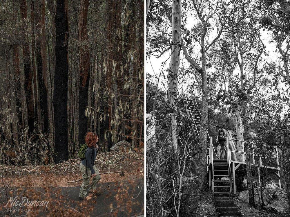 Walking through burnt forest in the Australian bush after a bushfire