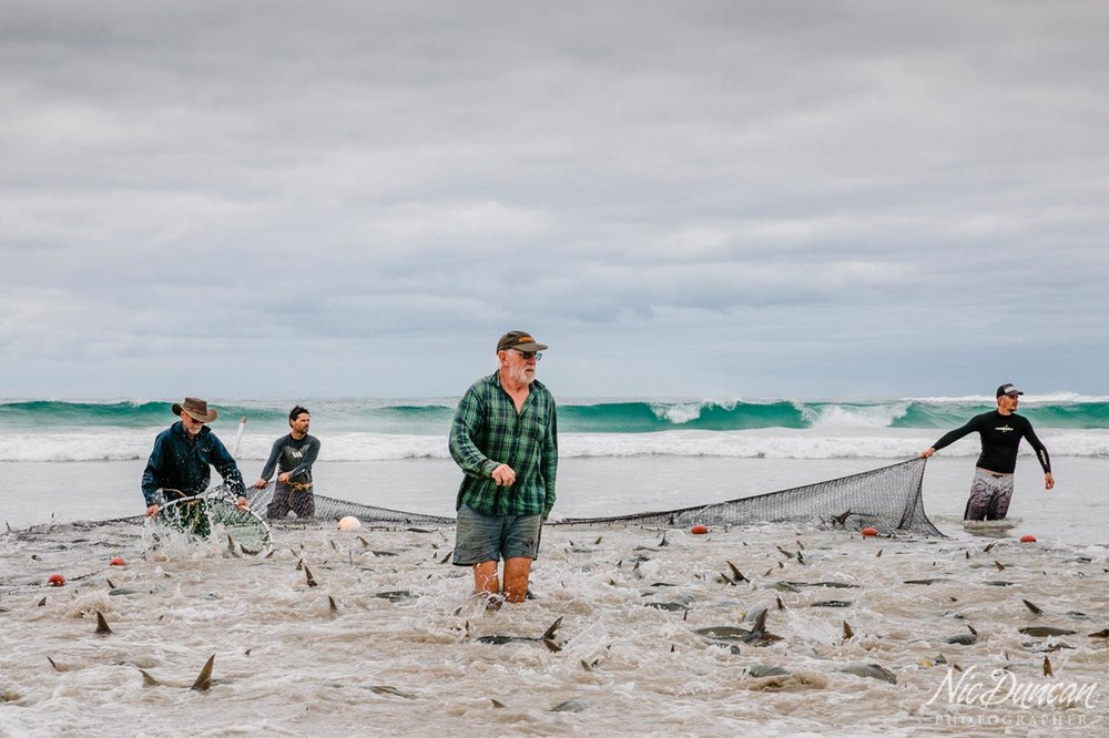 Commercial salmon fishermen landing their catch of Australian Salmon at Parrys Beach on the amazing south coast of Western Australia