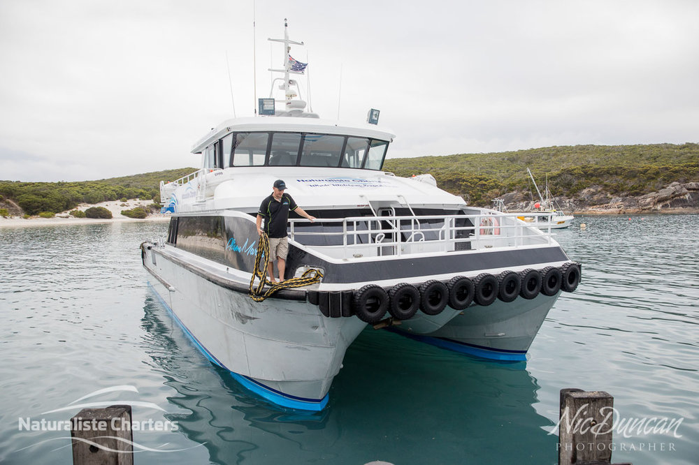 The Naturaliste Charters vessel, Alison Maree, was specially built for conditions on the Southern Ocean