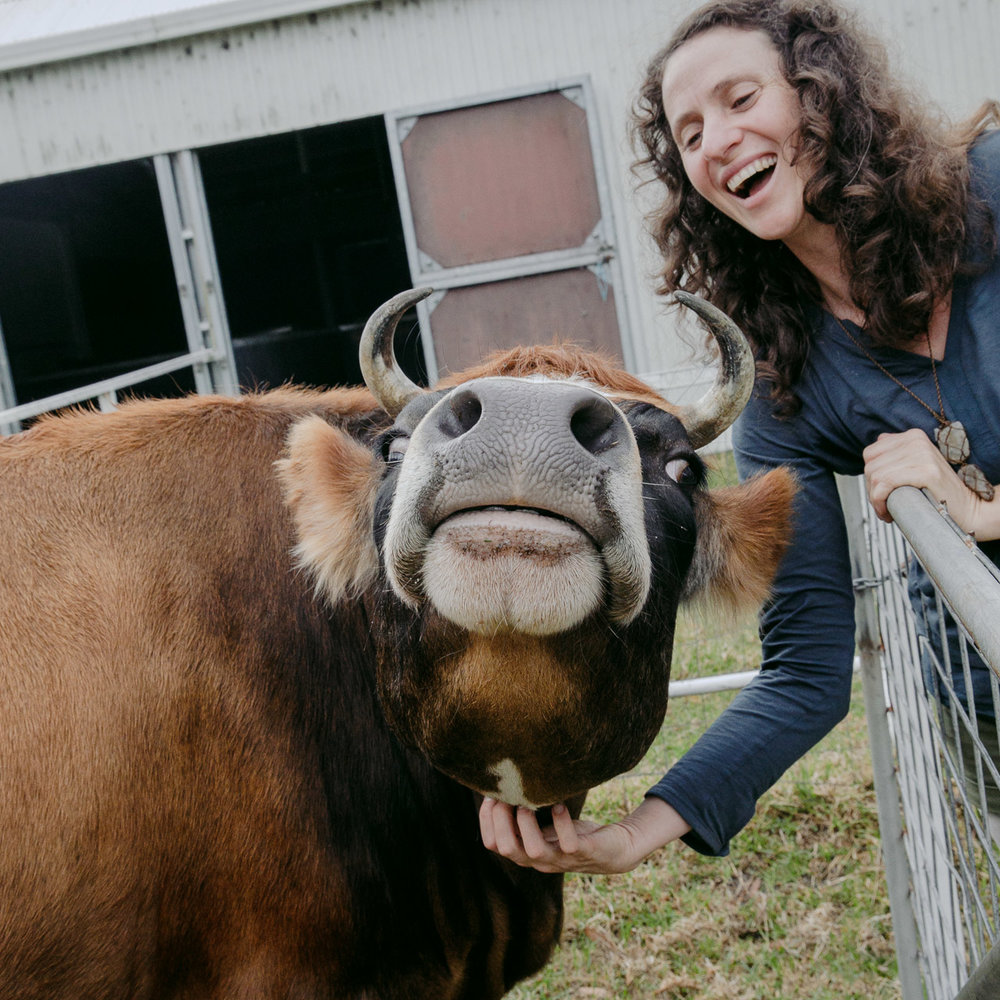 Nutmeg's ticklish spot - including the milking cow in the family portrait session