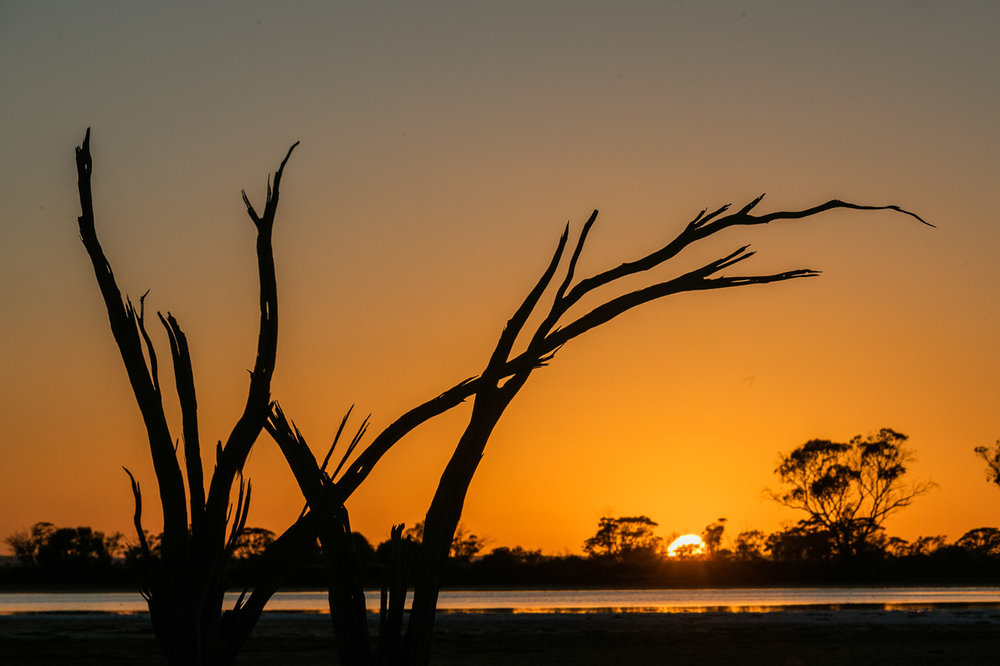 A dead tree silhouetted against the sunrise and salt lake in the Wheatbelt, WA