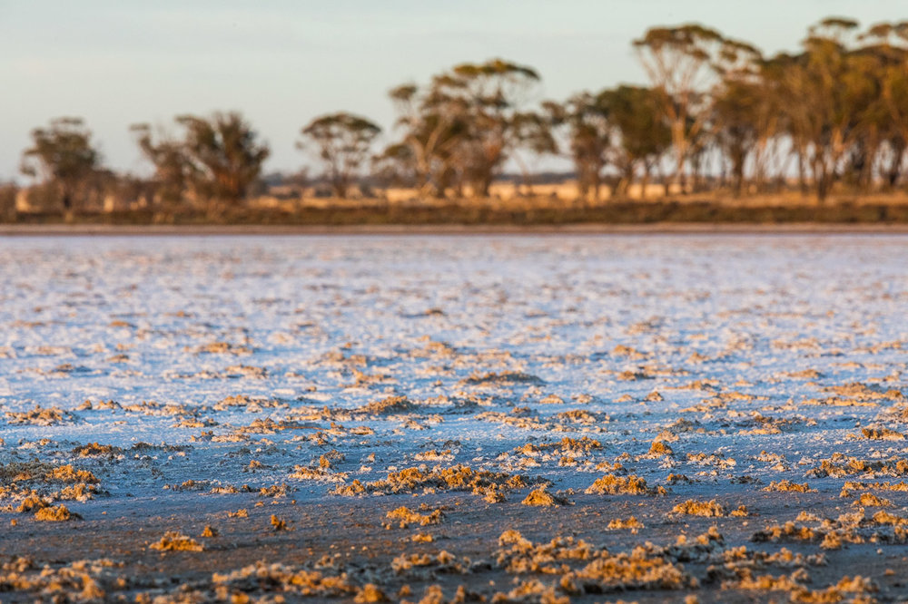 Textures of the salt on a lake with salmon gums behind at sunrise
