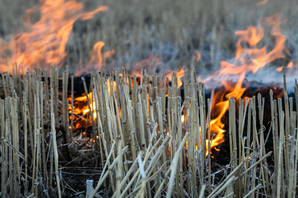 Close up macro of stubble and fire during windrow burning in the Wheatbelt, WA