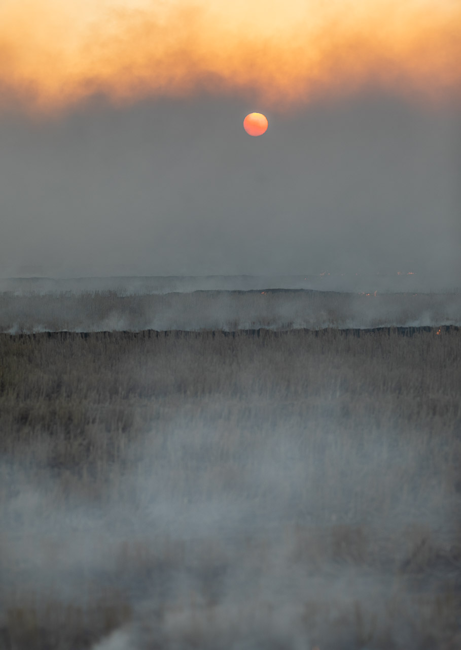 Windrow burning at sunset in Bruce Rock, WA