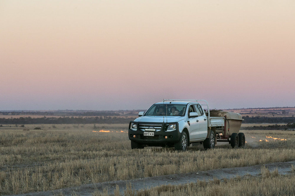 The farmer in his ute setting fire to the stubble for windrow burning in Bruce Rock, WA