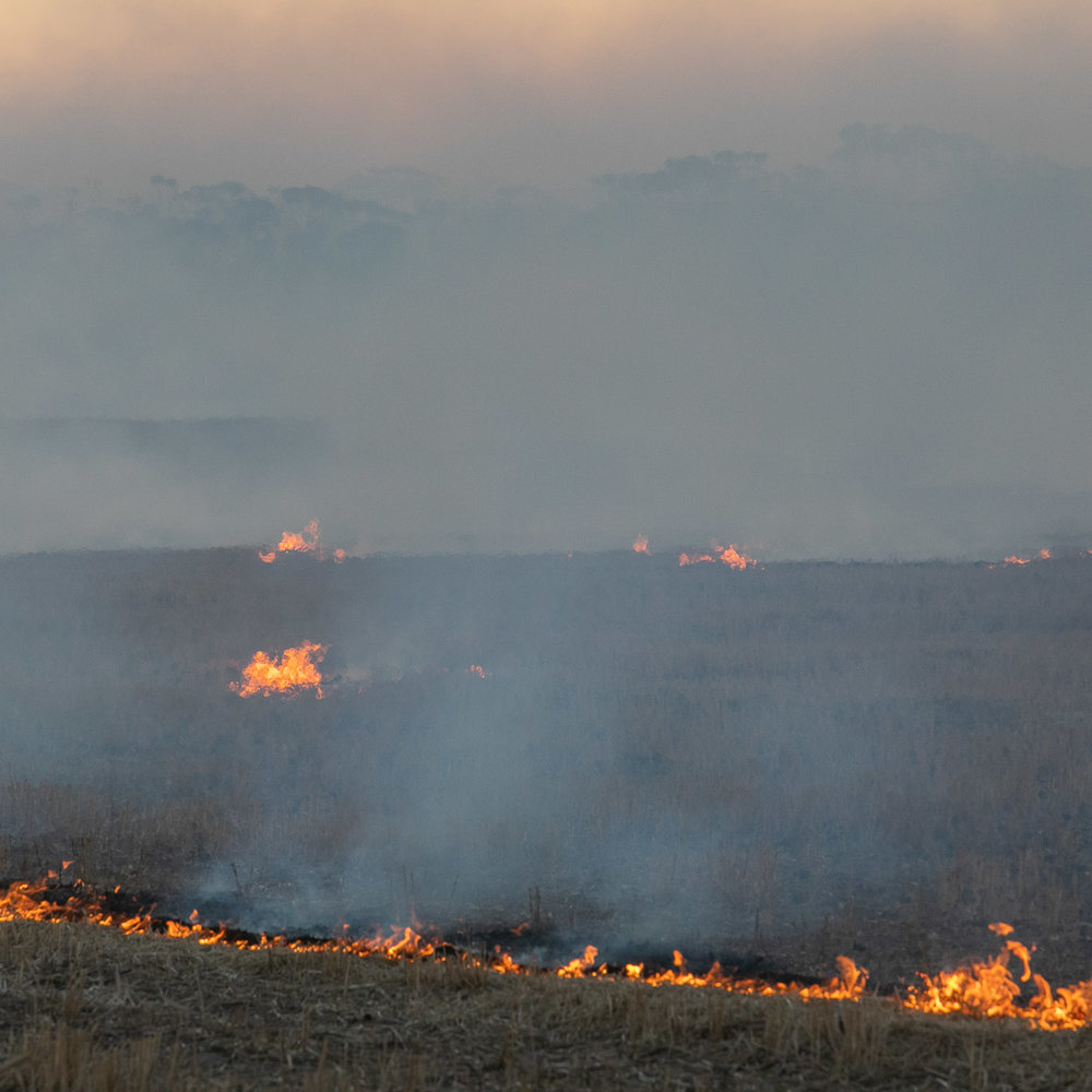 Windrow burning in Western Australian's wheatbelt region in Autumn