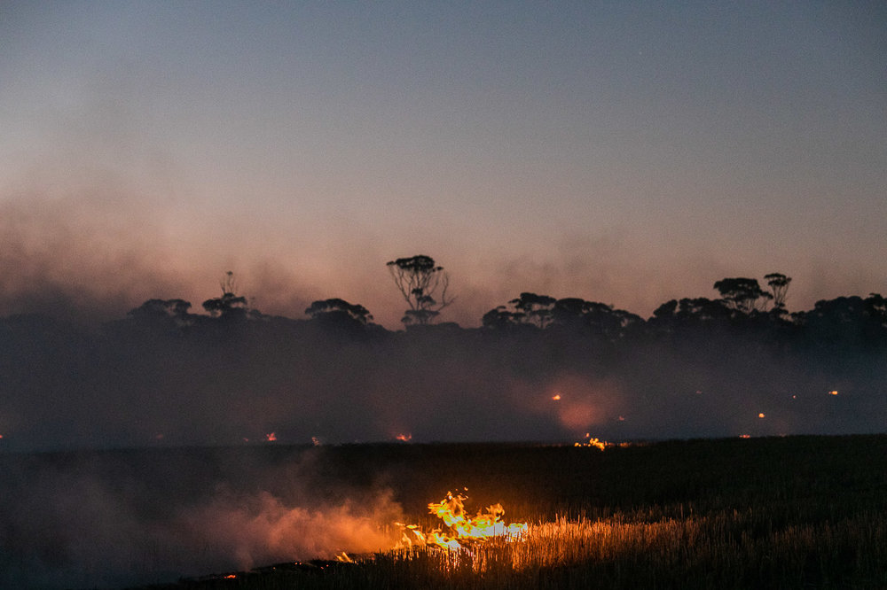 Windrow burning in the Wheatbelt - thick smoke, flames and salmon gums at sunset