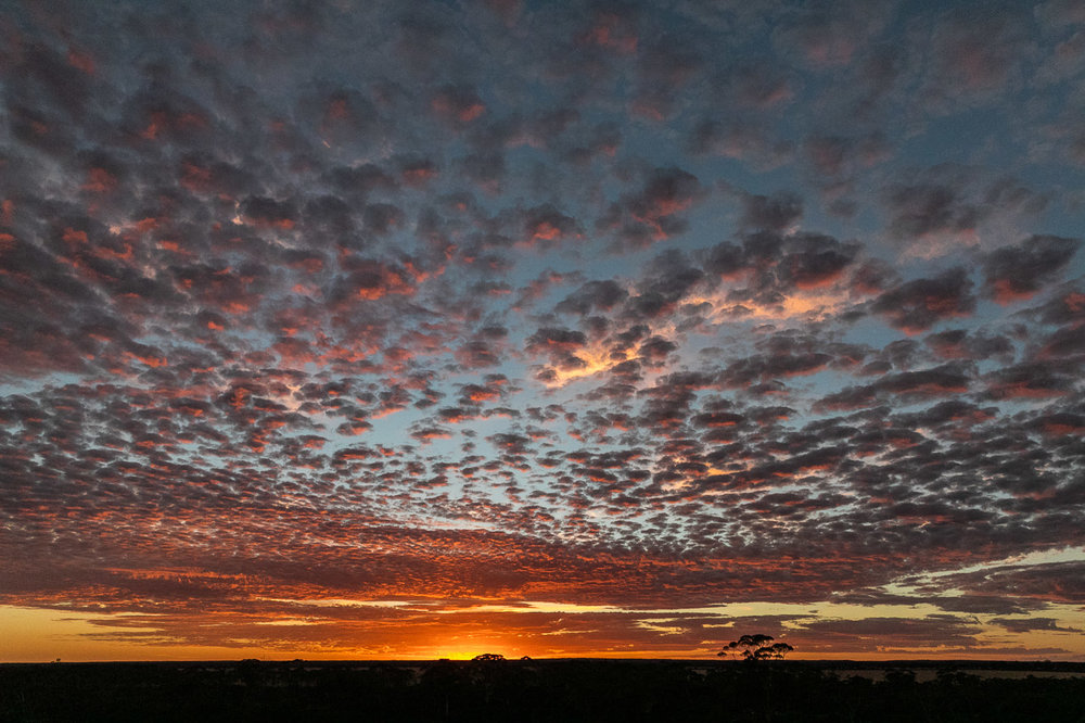 Sunrise in the wheatbelt